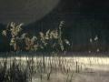 Pierwszy plener fotograficzny – Alex44, Roman K, Mckornik  fot. mckornik-7868-trzciny-mgla