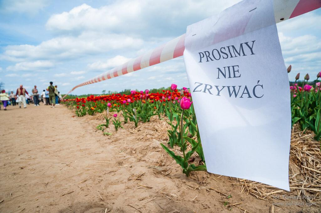 Hurtownia Ogrodnicza Bogdan Królik Chrzypsko Tulipany