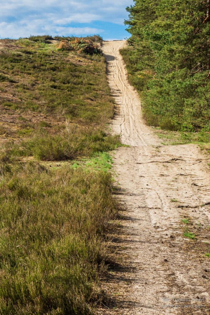 Użytek ekologiczny Wrzosowe Wydmy gmina Wronki  fot. Tomasz Koryl / www.pol-and.com